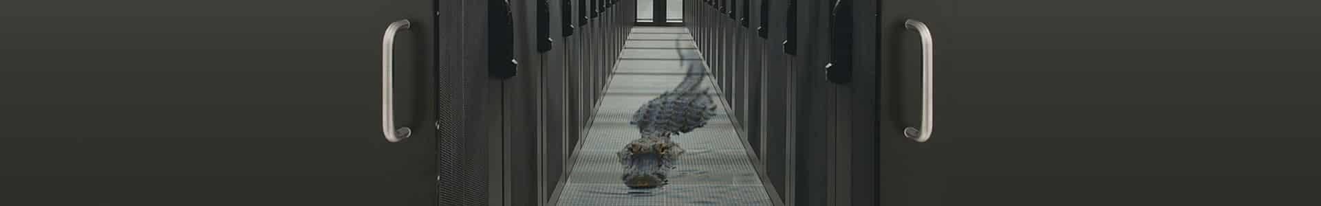 Image of alligator swimming between servers